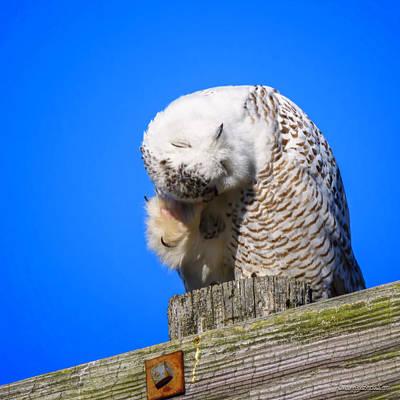Photograph - Thinking Snowy Owl  by LeeAnn McLaneGoetz McLaneGoetzStudioLLCcom