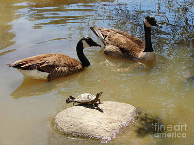 Photograph - Third Goose by Laura Brightwood