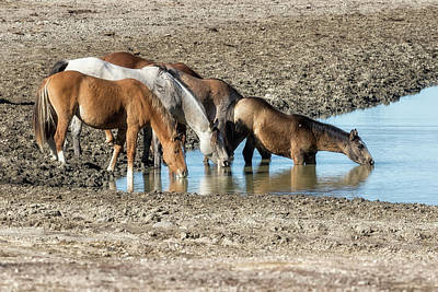 Photograph - Thirst by Belinda Greb