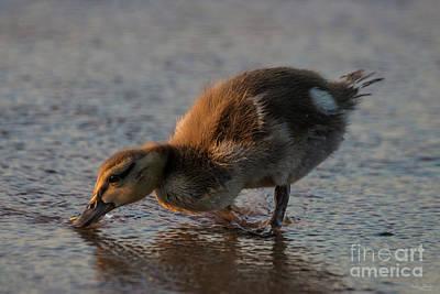 Photograph - Thirsty Baby by Jennifer White