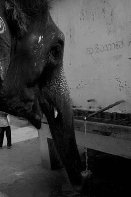 Thirsty Elephant Art Print by Deepak Pawar