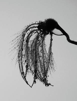 Photograph - Thirsty Mosquito  by The Artist Project