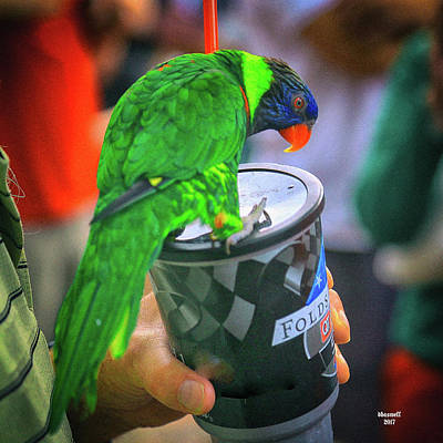 Photograph - Thirsty Parrot by Dennis Baswell