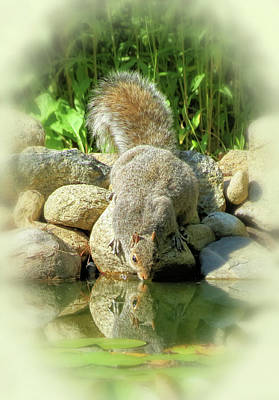 Photograph - Thirsty Squirrel - Vignette by MTBobbins Photography