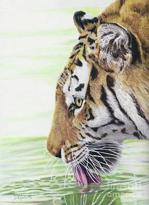 Painting - Thirsty Tiger by Diane Marcotte