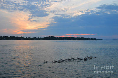 I Love Canada Photograph - Thirty-one Geese On The River by Sheila Lee