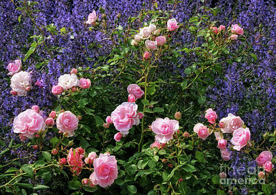 Photograph - This Beautiful Rose Garden by Gabriele Pomykaj