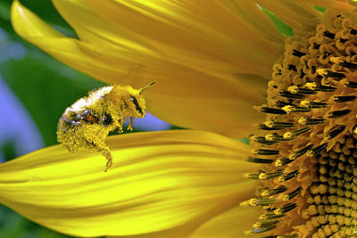 Photograph - This Bee Needs A Bath by David Freuthal