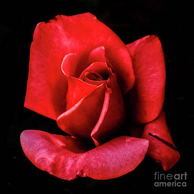 Photograph - This Bud Is For You by Robert Bales