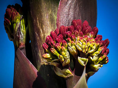 Photograph - This Bud's For You by Terry Ann Morris