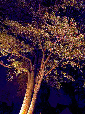 Photograph - This Difficult Tree by Guy Ricketts