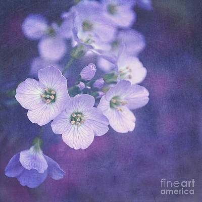 This Enchanted Evening Art Print by Lyn Randle