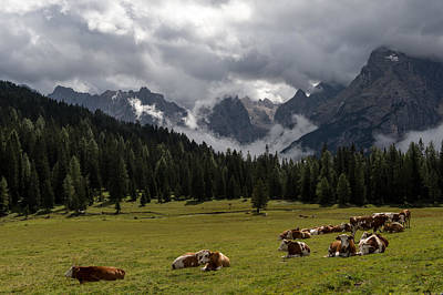 Photograph - This Is A Cow's World by Wim Slootweg