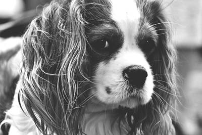 Darla Photograph - This Is Darla by Billy Soden