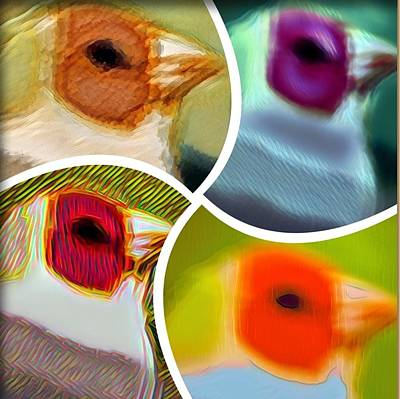 Digital Art - This Is For The Birds by Kae Art