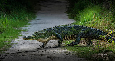 The Green Monster Photograph - This Is My Trail by Marvin Spates