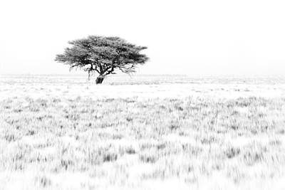 African Plains Photograph - This Is Namibia No.  9 - African Acacia Tree by Paul W Sharpe Aka Wizard of Wonders
