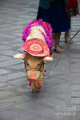 Christmas Eve Photograph - This Little Piggy Went To The Market by Al Bourassa