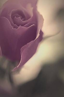 Fragile Photograph - This Love Rose by The Art Of Marilyn Ridoutt-Greene