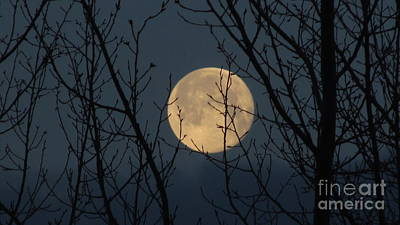 Photograph - This Mornings Moon by Janice Westerberg