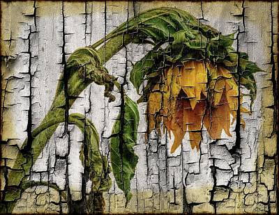 Photograph - This Old Sunflower by Sherman Perry