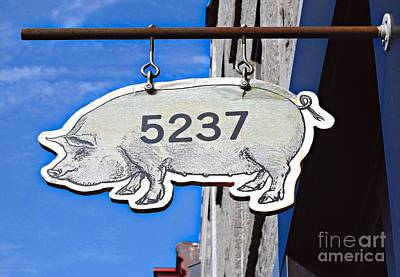 Photograph - This Pig Might Fly by Ethna Gillespie