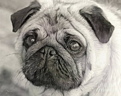 Photograph - This Puggy by Gabriele Pomykaj