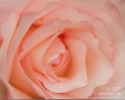 Nature Center Painting - This Rose Is For You by Nick  Boren