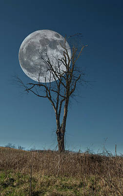 Photograph - This Tree Holds The Moon by Joe Sparks