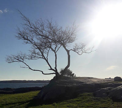 Photograph - This Tree Rocks by Lori Pessin Lafargue