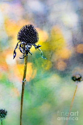 Photograph - Thistle At The Edge Of A Sunny Wood by Michael Arend