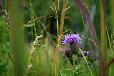 Photograph - Thistle Blossom In Tall Grass by Mary Lee Dereske