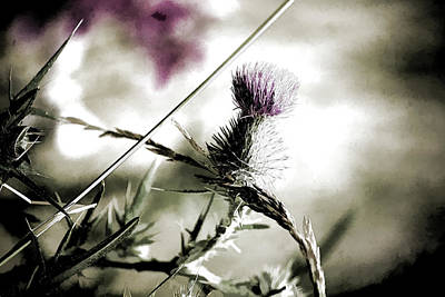 Morning Light Mixed Media - Thistle by Bonnie Bruno