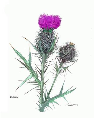 Painting - Thistle - Cirsium Horridulum Or Texanum by Michael Earney