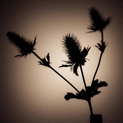 Photograph - Thistle by Dave Bowman