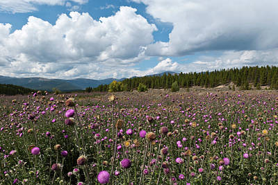 Photograph - Thistle Field And Mountain Landscape by Cascade Colors