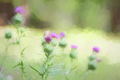 Photograph - Thistle Impression by Kathy Clark