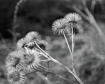 Photograph - Thistle In Black And White by Leah Palmer