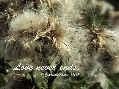 Photograph - Thistle In Seed by Judi Saunders