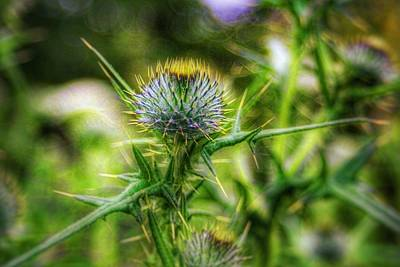 Photograph - Thistle by Abbie Shores