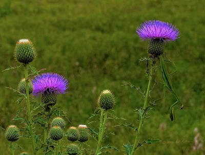 Photograph - Thistle Lights And Preying Mantis by Edward Peterson