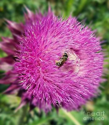 Photograph - Thistle Macro 17-01 by Maria Urso