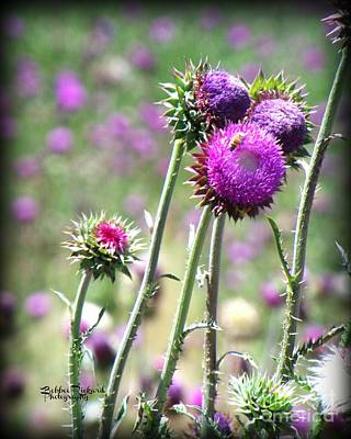 Photograph - Thistle N The Bee  by Bobbee Rickard