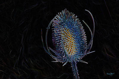 Photograph - Thistle by Shanna Hyatt