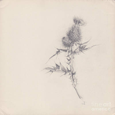 Drawing - Thistle Sketchpad Page by Paul Davenport