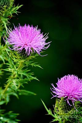 Photograph - Thistle by Tamara Michael