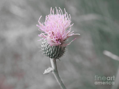 Photograph - Thistle Wildflower by Ella Kaye Dickey