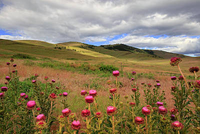 Photograph - Thistles by Jack Bell