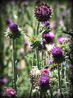 Photograph - Thistles Of Beauty by Bobbee Rickard