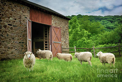 Thompson-neely Farmstead Sheep Art Print by Priscilla Burgers